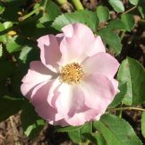 light-pink-2